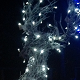Christmas Lights at Center Parcs Christmas Winter Wonderland