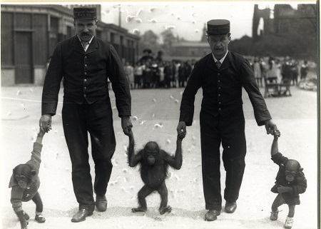 Belle Vue Monkeys | Chethams Library
