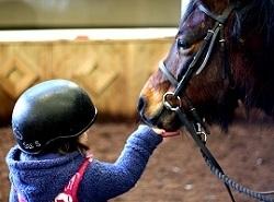 Child feeding a pony, photo by Sarah Jane King