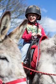 Child riding the donkey at the Geronimo Donkey Rides